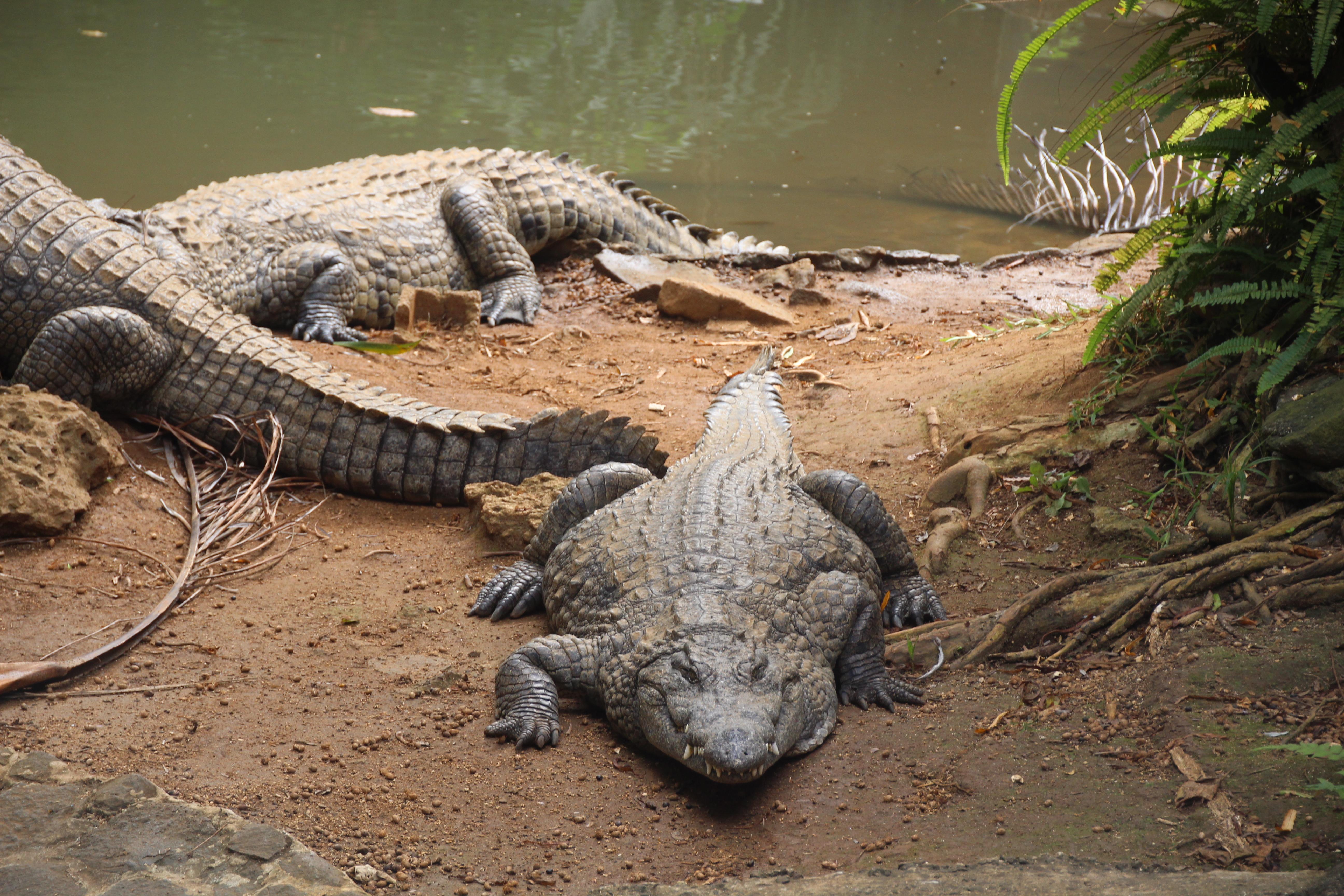 La Vanille Crocodile Park and Nature Reserve