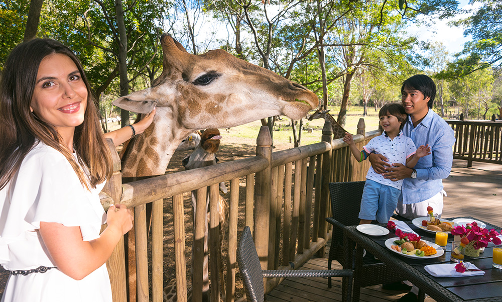 Breakfast with giraffes at Casela